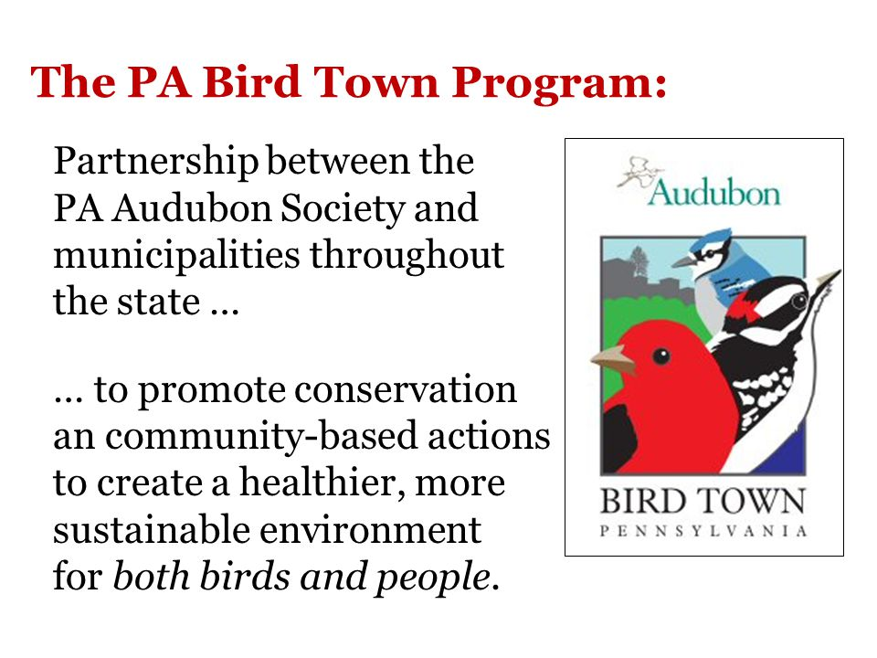 The PA Bird Town Program: Partnership between the PA Audubon Society and municipalities throughout the state … … to promote conservation an community-based actions to create a healthier, more sustainable environment for both birds and people.