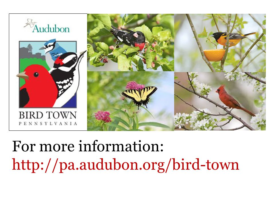 For more information: http://pa.audubon.org/bird-town