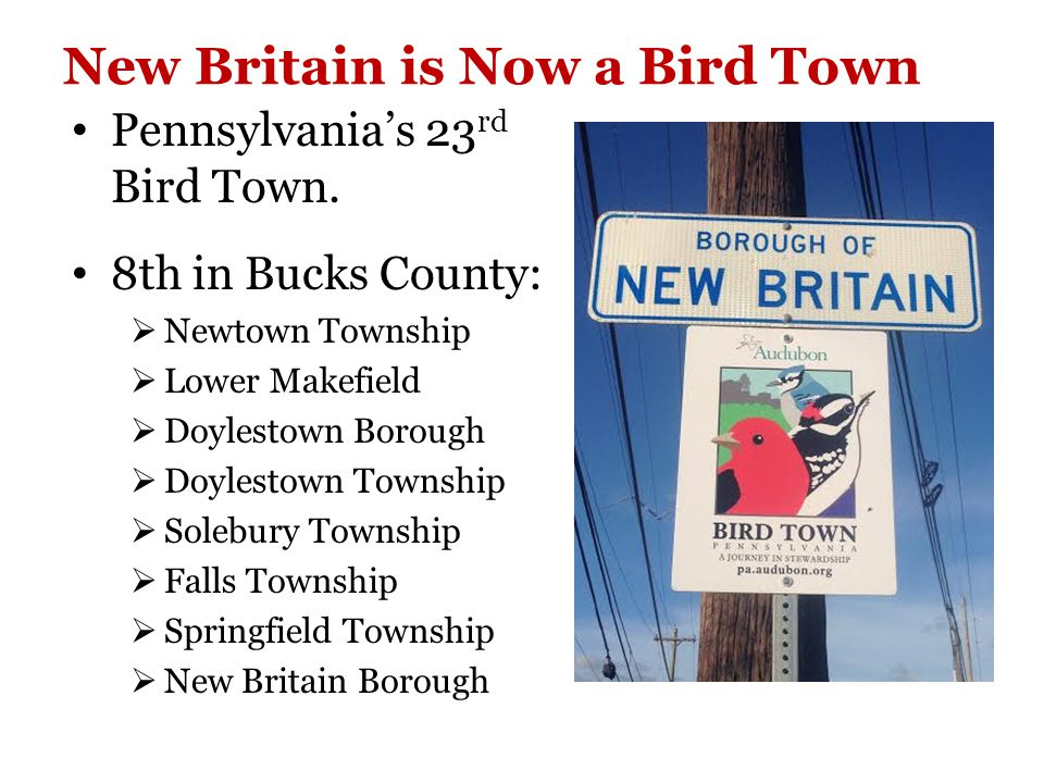 New Britain is Now a Bird Town Pennsylvania's 23 rd Bird Town.