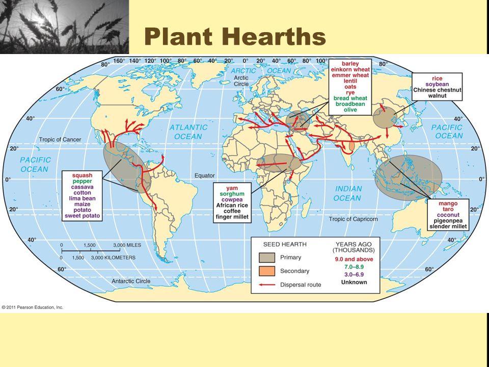 Plant Hearths