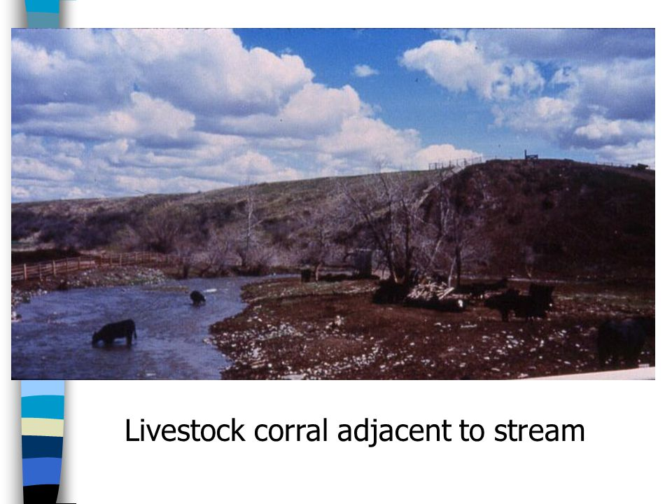 Livestock corral adjacent to stream