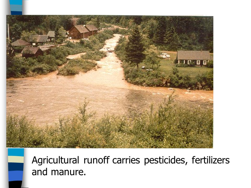 Agricultural runoff carries pesticides, fertilizers and manure.