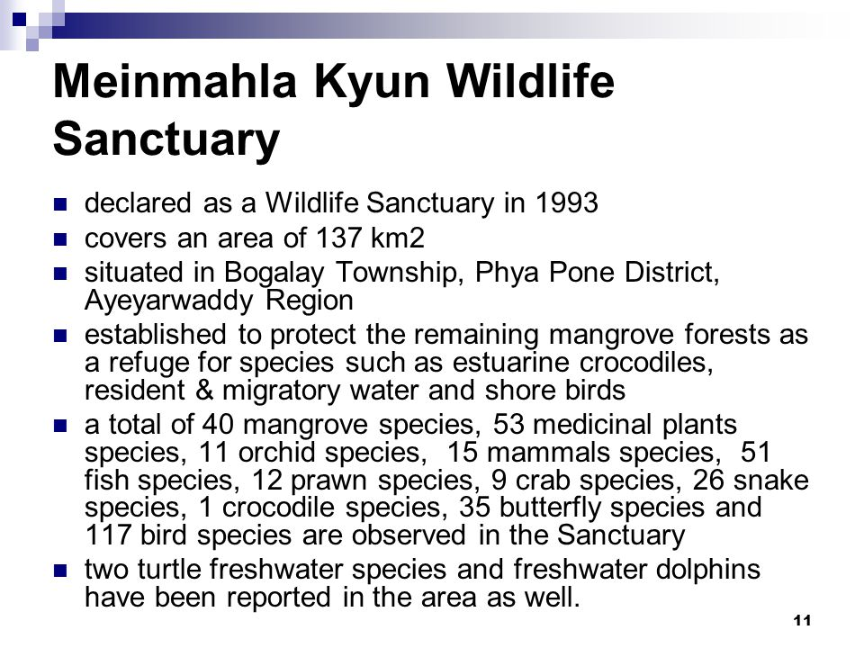 11 Meinmahla Kyun Wildlife Sanctuary declared as a Wildlife Sanctuary in 1993 covers an area of 137 km2 situated in Bogalay Township, Phya Pone District, Ayeyarwaddy Region established to protect the remaining mangrove forests as a refuge for species such as estuarine crocodiles, resident & migratory water and shore birds a total of 40 mangrove species, 53 medicinal plants species, 11 orchid species, 15 mammals species, 51 fish species, 12 prawn species, 9 crab species, 26 snake species, 1 crocodile species, 35 butterfly species and 117 bird species are observed in the Sanctuary two turtle freshwater species and freshwater dolphins have been reported in the area as well.