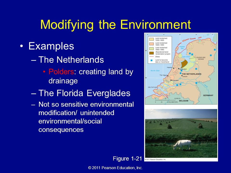 © 2011 Pearson Education, Inc. Modifying the Environment Examples –The Netherlands Polders: creating land by drainage –The Florida Everglades –Not so