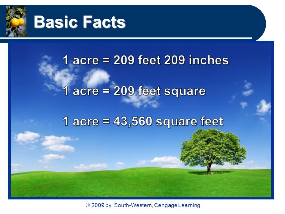 © 2009 by South-Western, Cengage Learning Basic Facts
