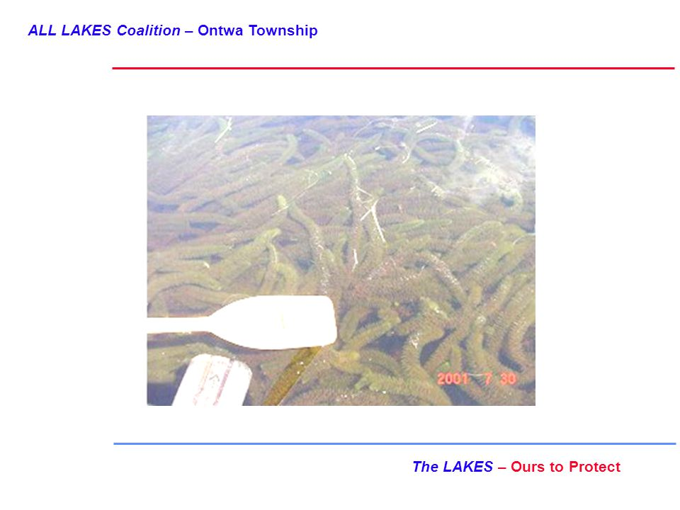 ALL LAKES Coalition – Ontwa Township The LAKES – Ours to Protect