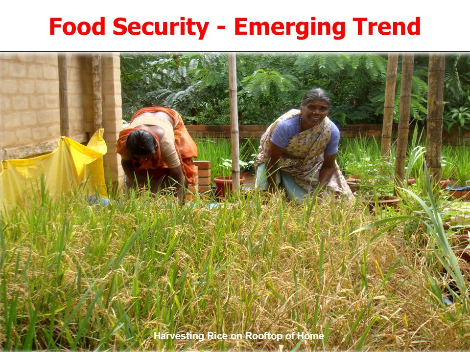 © Confederation of Indian Industry ® Food Security - Emerging Trend Harvesting Rice on Rooftop of Home