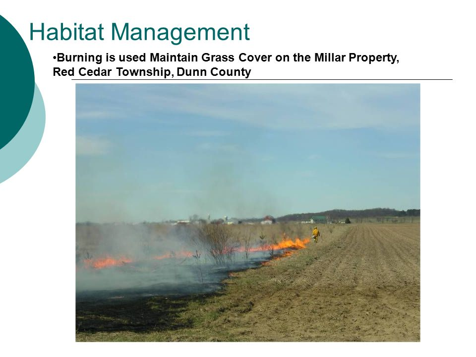 Habitat Management Burning is used Maintain Grass Cover on the Millar Property, Red Cedar Township, Dunn County