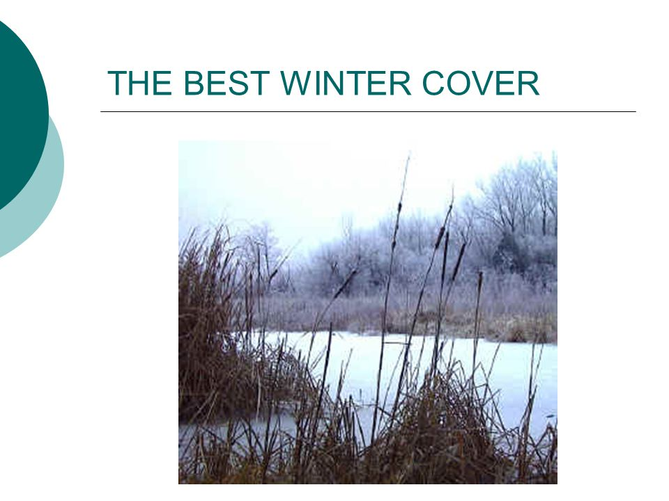 THE BEST WINTER COVER