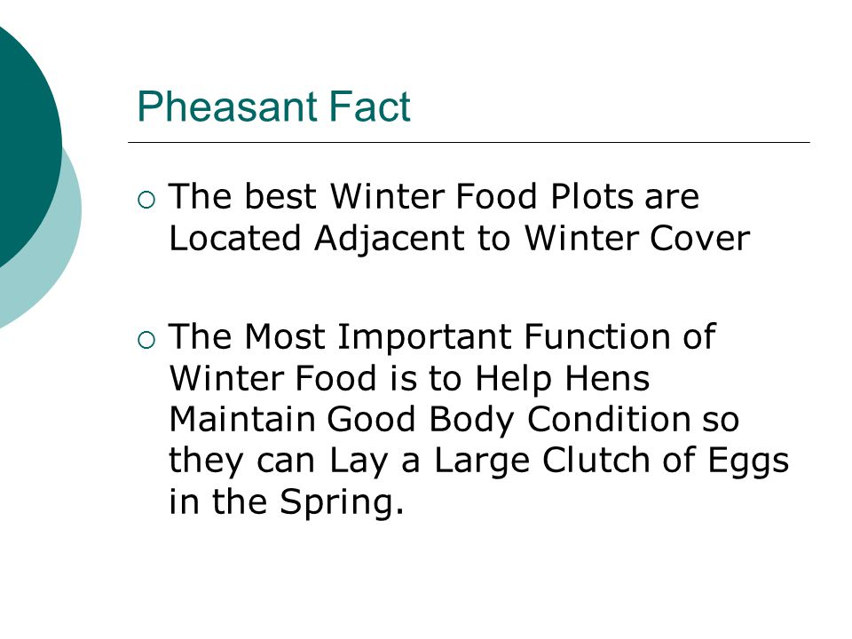 Pheasant Fact  The best Winter Food Plots are Located Adjacent to Winter Cover  The Most Important Function of Winter Food is to Help Hens Maintain