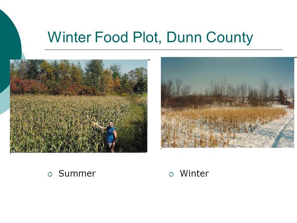 Winter Food Plot, Dunn County  Summer  Winter