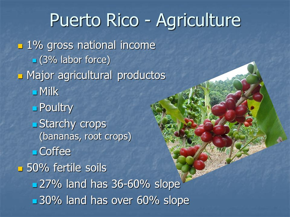 Puerto Rico - Agriculture 1% gross national income 1% gross national income (3% labor force) (3% labor force) Major agricultural productos Major agric
