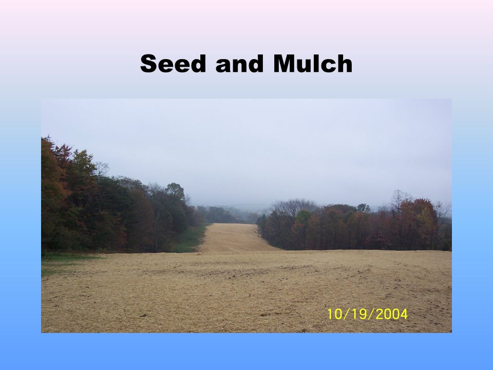 Seed and Mulch