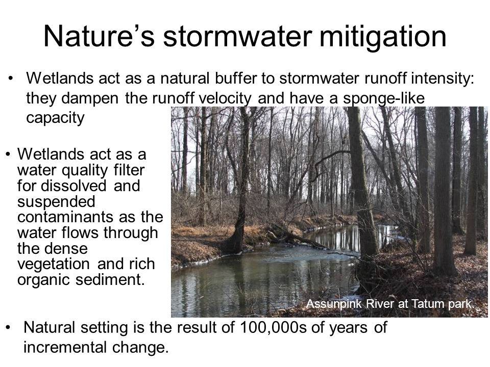 Wetlands act as a natural buffer to stormwater runoff intensity: they dampen the runoff velocity and have a sponge-like capacity Nature's stormwater mitigation Wetlands act as a water quality filter for dissolved and suspended contaminants as the water flows through the dense vegetation and rich organic sediment.