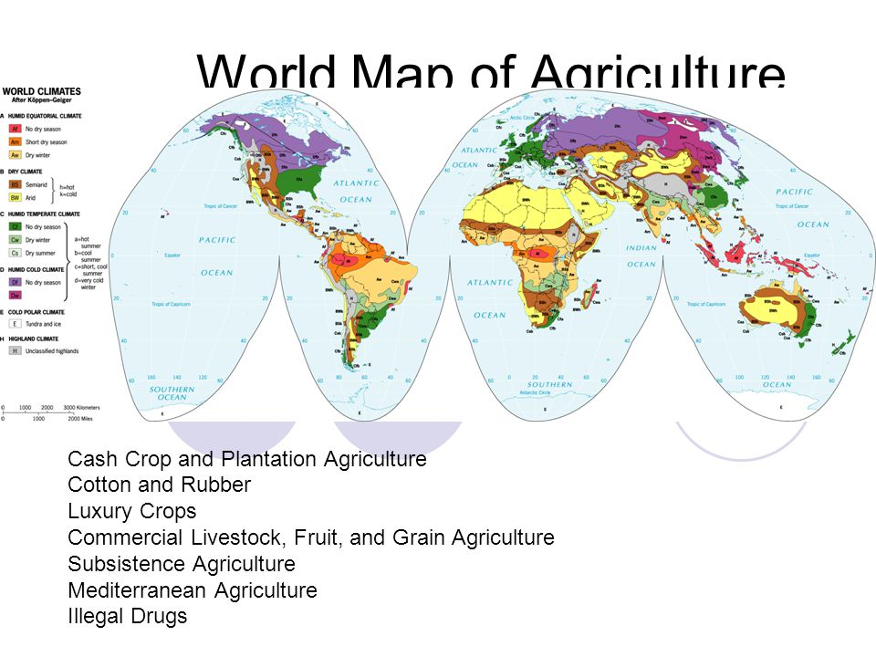 World Map of Agriculture Cash Crop and Plantation Agriculture Cotton and Rubber Luxury Crops Commercial Livestock, Fruit, and Grain Agriculture Subsis