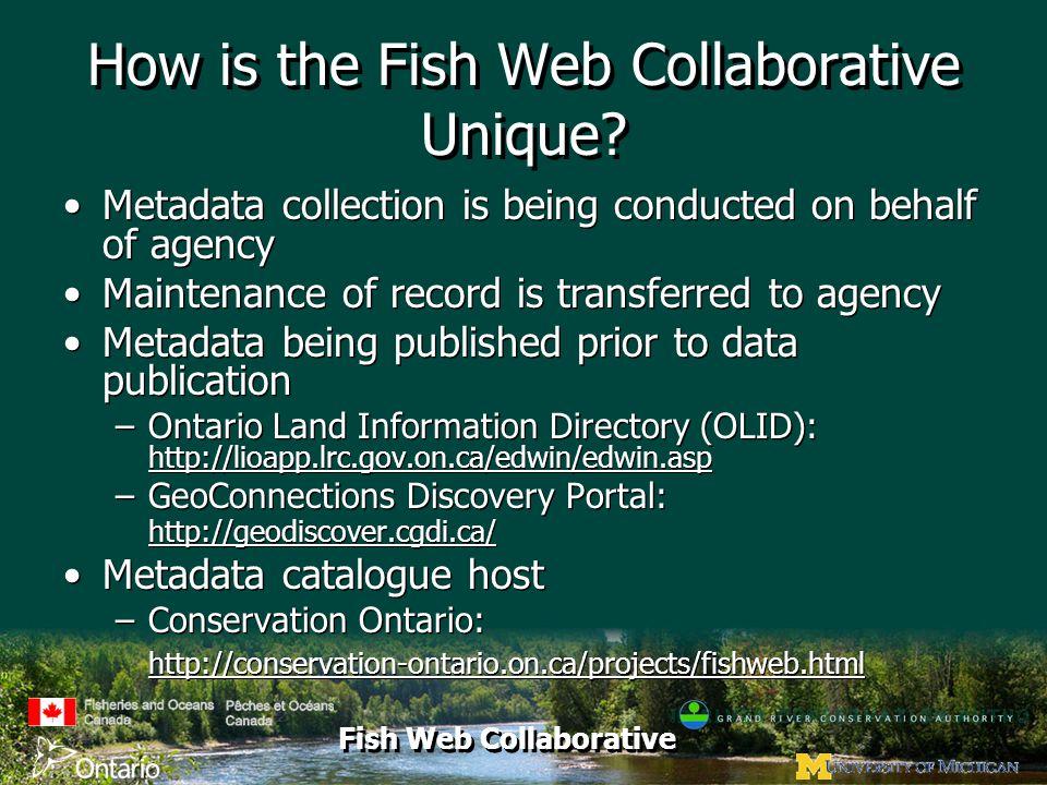 Fish Web Collaborative How is the Fish Web Collaborative Unique.