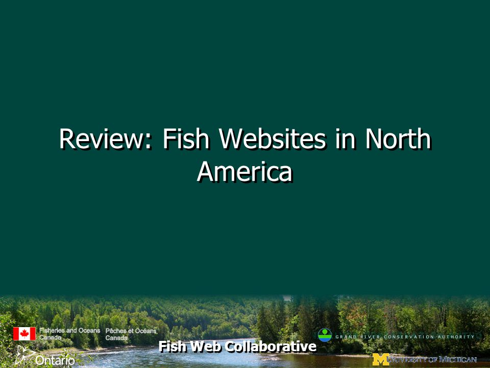 Fish Web Collaborative Review: Fish Websites in North America