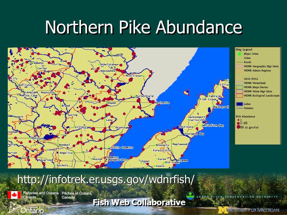Fish Web Collaborative Northern Pike Abundance http://infotrek.er.usgs.gov/wdnrfish/