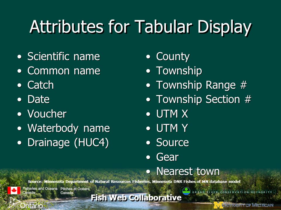 Fish Web Collaborative Attributes for Tabular Display Scientific name Common name Catch Date Voucher Waterbody name Drainage (HUC4) Scientific name Common name Catch Date Voucher Waterbody name Drainage (HUC4) County Township Township Range # Township Section # UTM X UTM Y Source Gear Nearest town Source: Minnesota Department of Natural Resources Fisheries, Minnesota DNR Fishes of MN database model