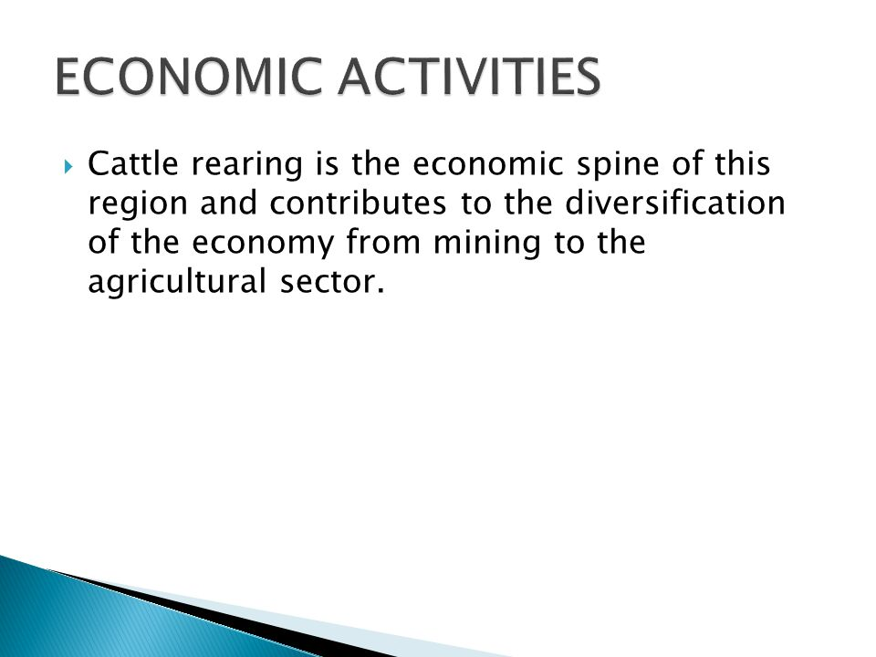  Cattle rearing is the economic spine of this region and contributes to the diversification of the economy from mining to the agricultural sector.