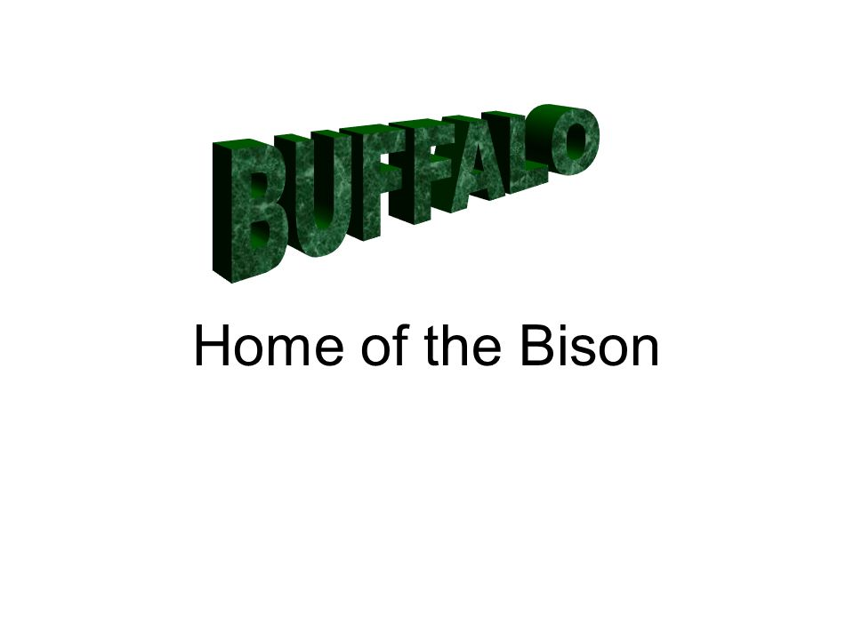 Home of the Bison