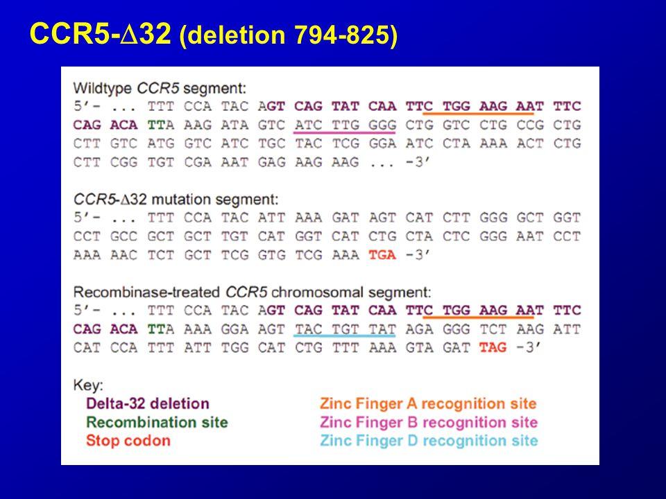 CCR5-  32 (deletion 794-825)