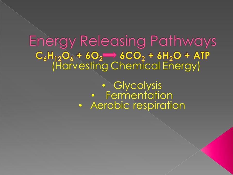 (Harvesting Chemical Energy) Glycolysis Fermentation Aerobic respiration