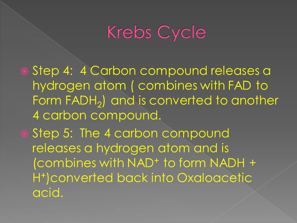  Step 4: 4 Carbon compound releases a hydrogen atom ( combines with FAD to Form FADH 2 ) and is converted to another 4 carbon compound.