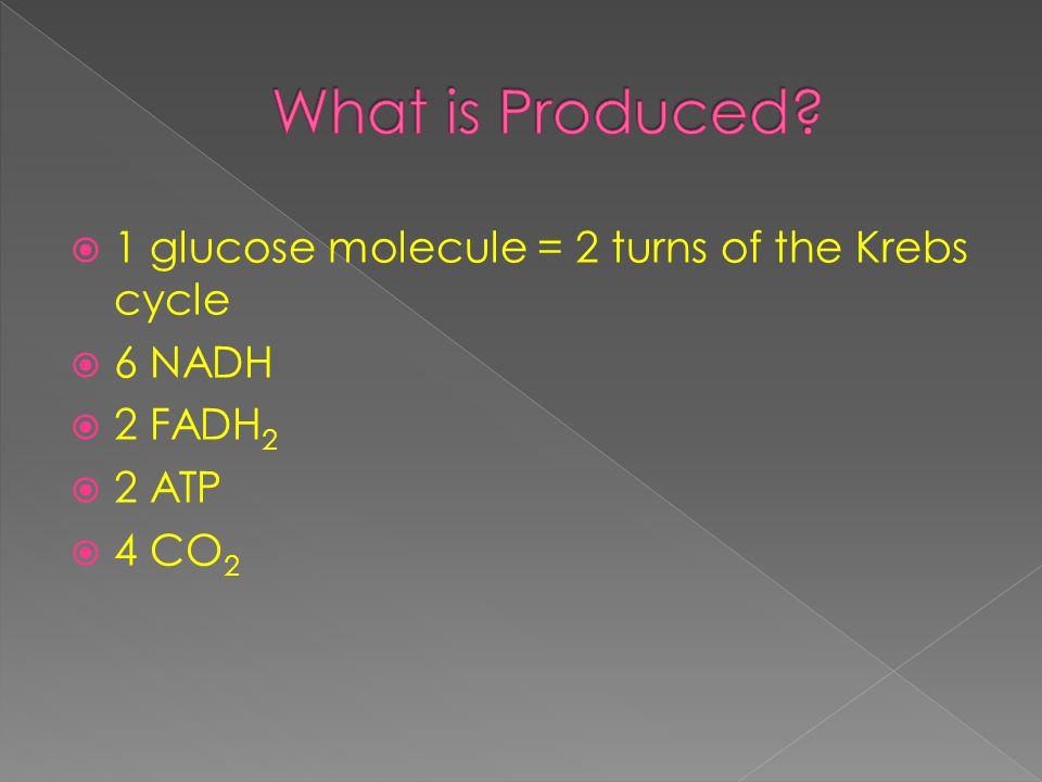  1 glucose molecule = 2 turns of the Krebs cycle  6 NADH  2 FADH 2  2 ATP  4 CO 2