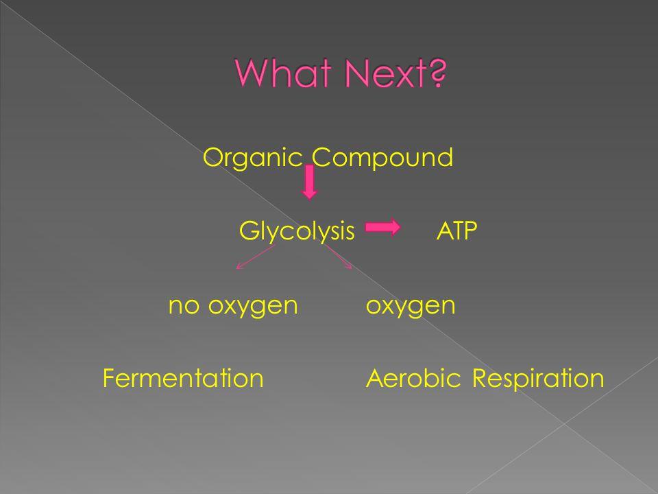 Organic Compound Glycolysis ATP no oxygenoxygen FermentationAerobic Respiration