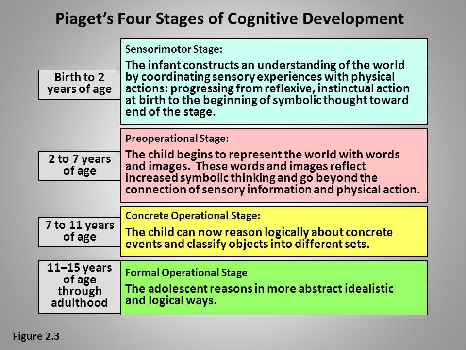 Cognitive theories: Piaget's cognitive developmental theory – Stresses conscious mental processes – Cognitive processes are influenced by biological m