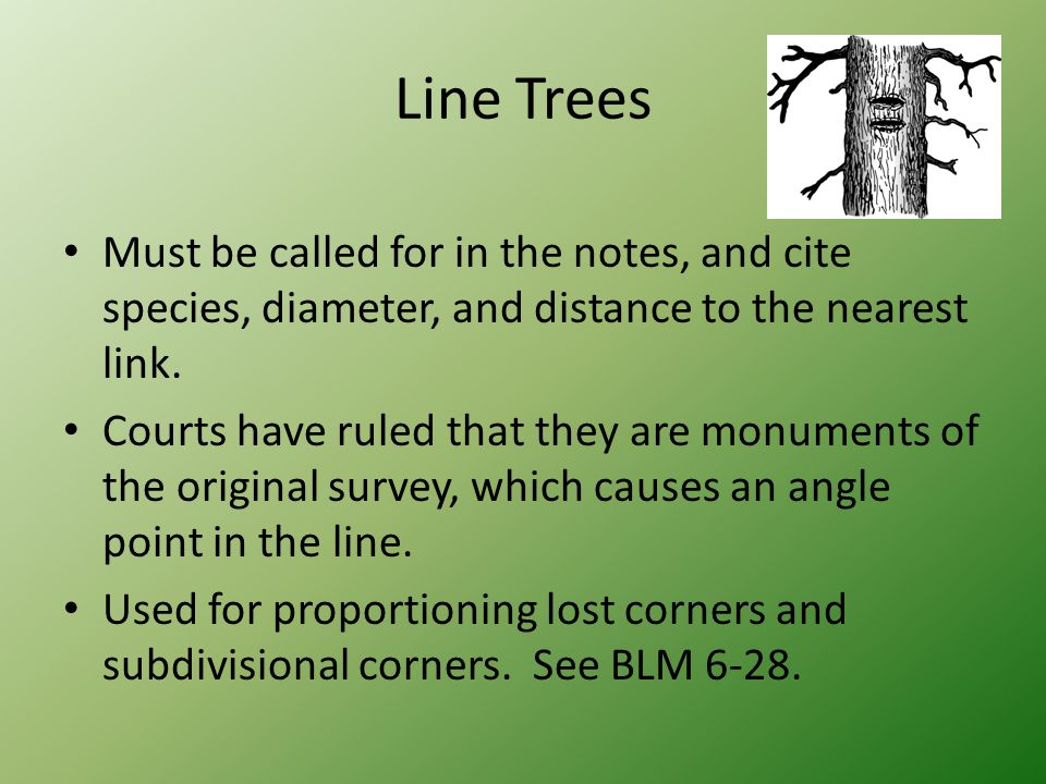 Line Trees Must be called for in the notes, and cite species, diameter, and distance to the nearest link. Courts have ruled that they are monuments of