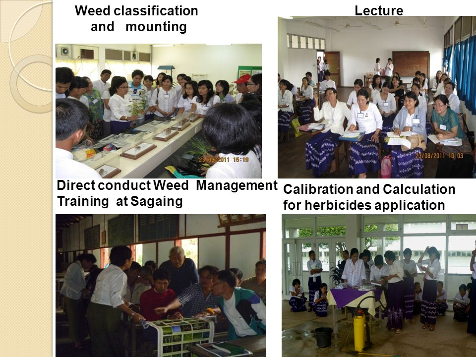 Direct conduct Weed Management Training at Sagaing Weed classification and mounting Lecture Calibration and Calculation for herbicides application