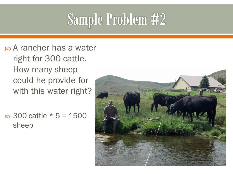  A rancher has a water right for 300 cattle.