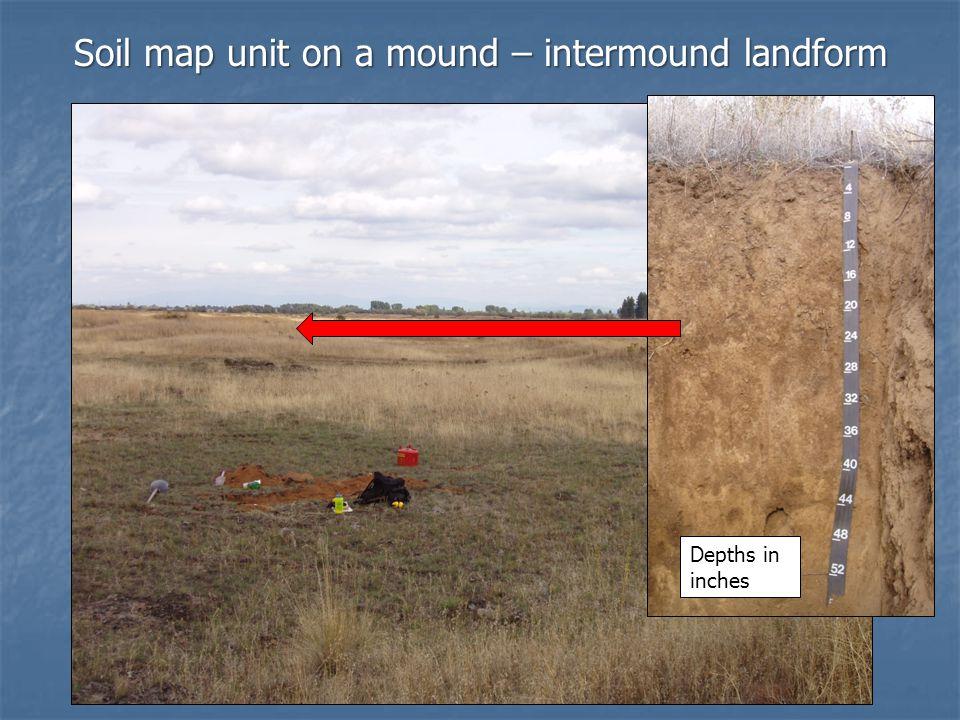 Soil map unit on a mound – intermound landform Depths in inches