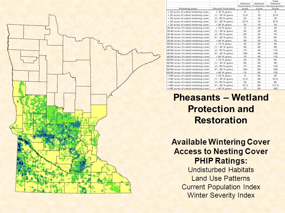 Pheasants – Wetland Protection and Restoration Available Wintering Cover Access to Nesting Cover PHIP Ratings: Undisturbed Habitats Land Use Patterns