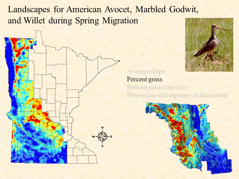 Landscapes for American Avocet, Marbled Godwit, and Willet during Spring Migration Average slope Percent grass Percent palustrine (ln) Proportion of temporary and seasonal