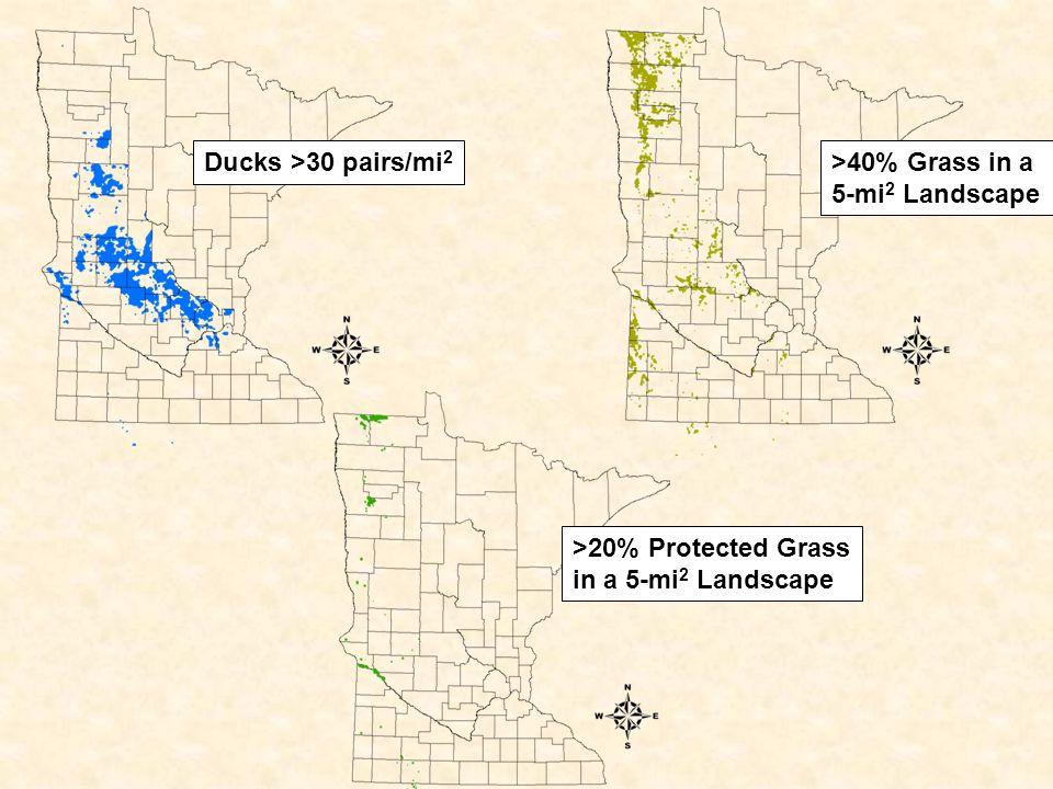 Ducks >30 pairs/mi 2 >40% Grass in a 5-mi 2 Landscape >20% Protected Grass in a 5-mi 2 Landscape