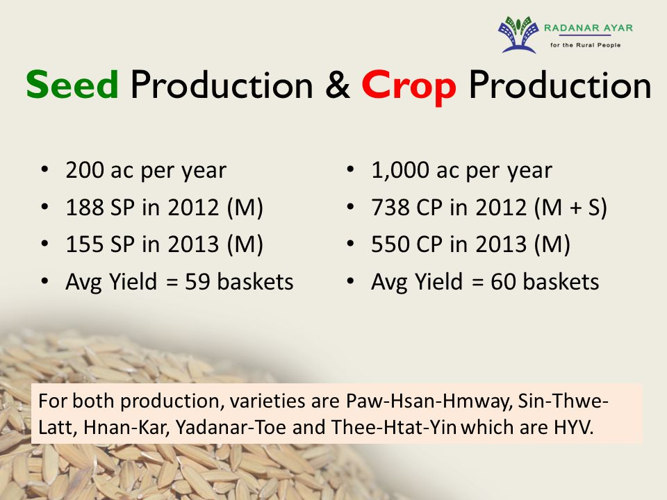 Seed Production & Crop Production 200 ac per year 188 SP in 2012 (M) 155 SP in 2013 (M) Avg Yield = 59 baskets 1,000 ac per year 738 CP in 2012 (M + S) 550 CP in 2013 (M) Avg Yield = 60 baskets For both production, varieties are Paw-Hsan-Hmway, Sin-Thwe- Latt, Hnan-Kar, Yadanar-Toe and Thee-Htat-Yin which are HYV.
