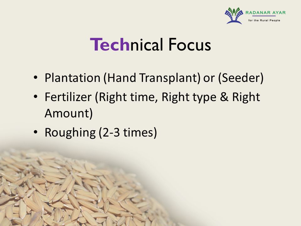 Technical Focus Plantation (Hand Transplant) or (Seeder) Fertilizer (Right time, Right type & Right Amount) Roughing (2-3 times)
