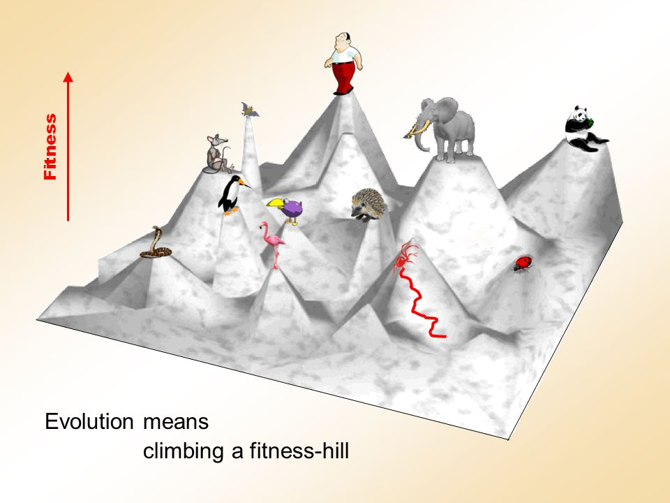 Evolution means climbing a fitness-hill Fitness