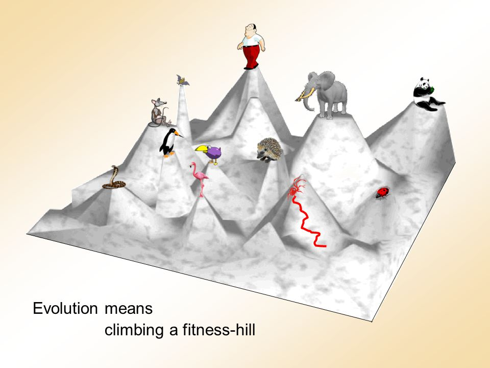 Evolution means climbing a fitness-hill