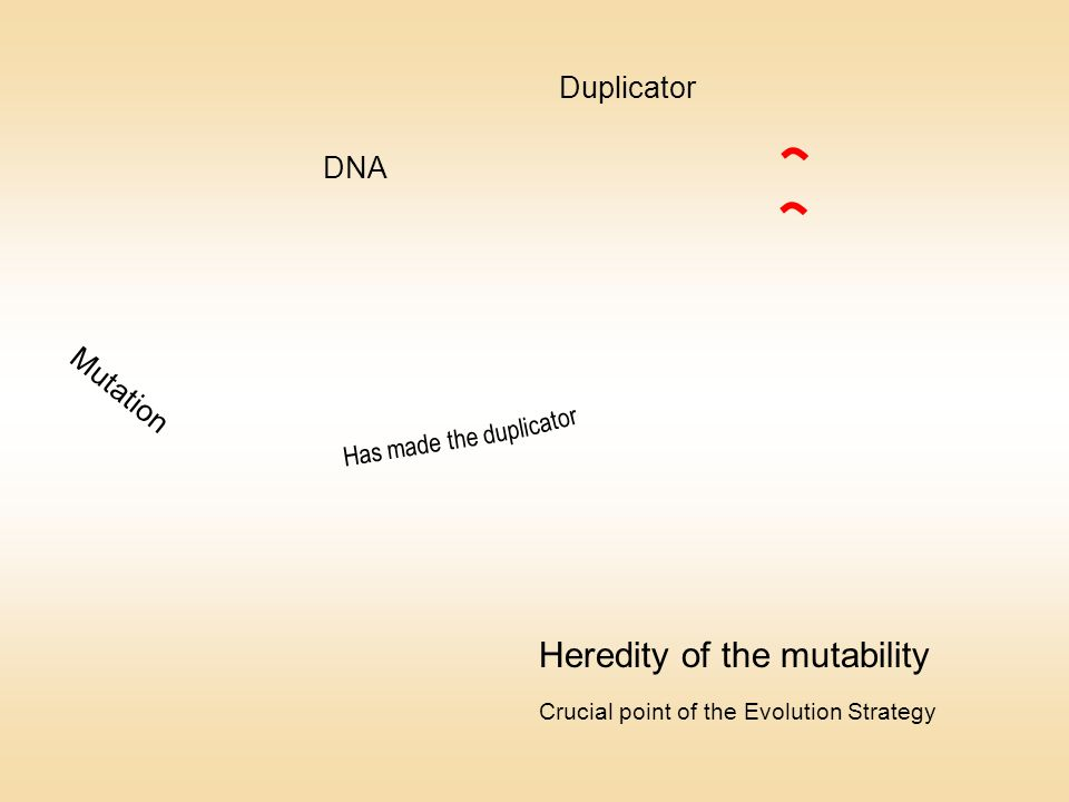 Mutation Duplicator DNA Has made the dupli cator Heredity of the mutability Crucial point of the Evolution Strategy
