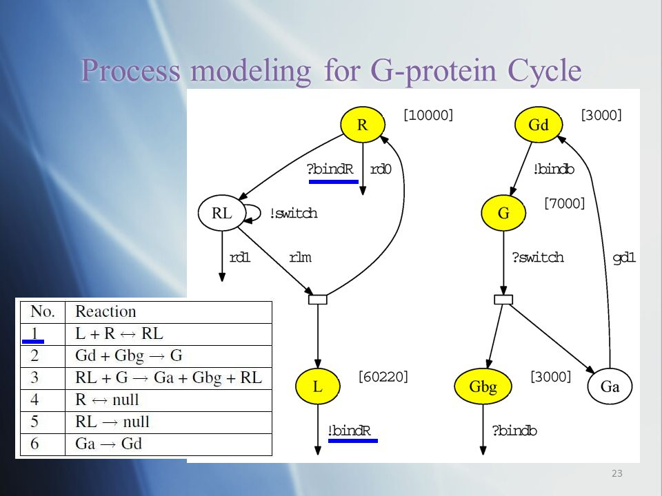 Process modeling for G-protein Cycle 23