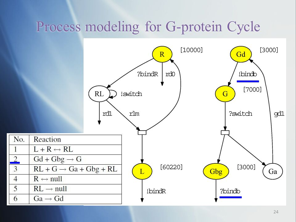 Process modeling for G-protein Cycle 24