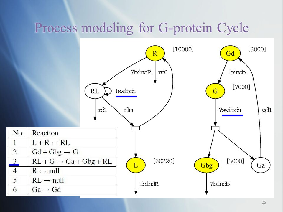 Process modeling for G-protein Cycle 25