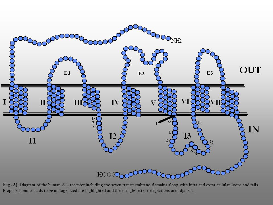 Introduction to Angiotensin II type-2 Receptor (AT 2 R)  Member of the G-protein Coupled Receptor(GPCR) superfamily.