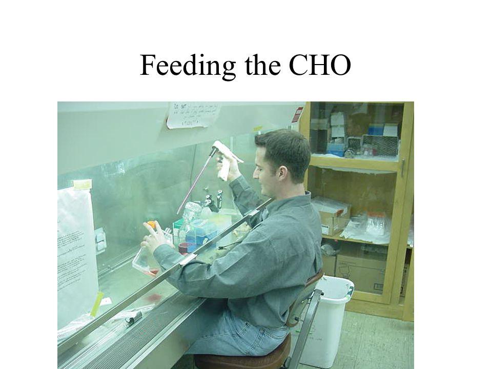 Examining Cells