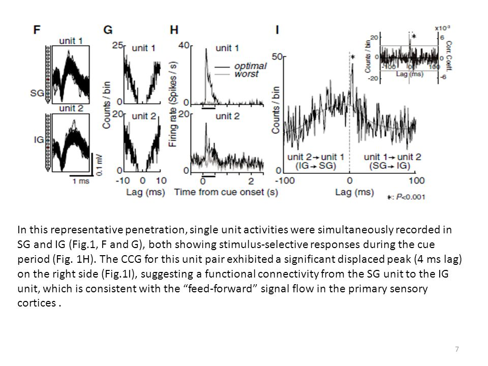 In this representative penetration, single unit activities were simultaneously recorded in SG and IG (Fig.1, F and G), both showing stimulus-selective