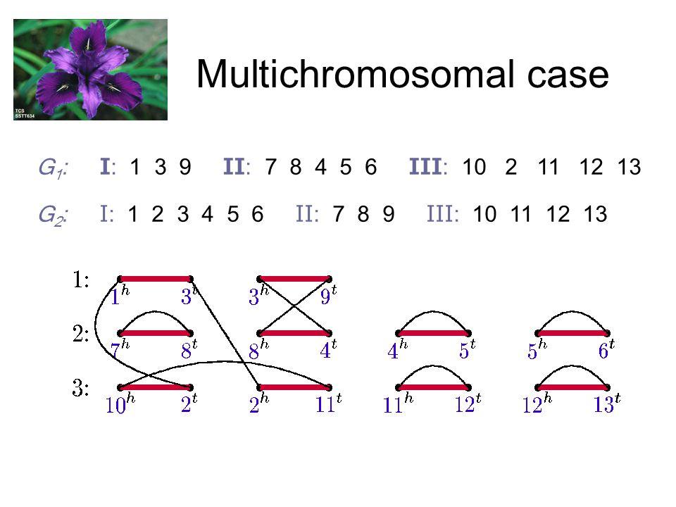 Multichromosomal case G 1 : I: 1 3 9 II: 7 8 4 5 6 III: 10 2 11 12 13 G 2 : I: 1 2 3 4 5 6 II: 7 8 9 III: 10 11 12 13